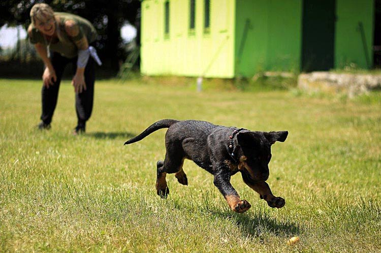 Hond spelen in het dierenpension