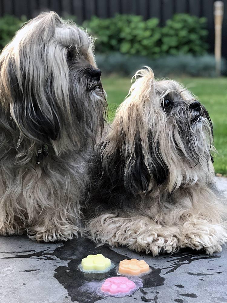 Genieten van een hondenijsje