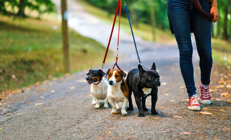 Honden uitlaat service