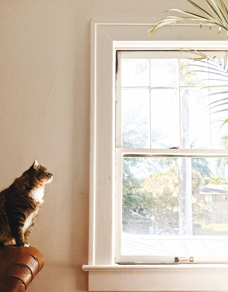 Katten: binnen houden of niet?