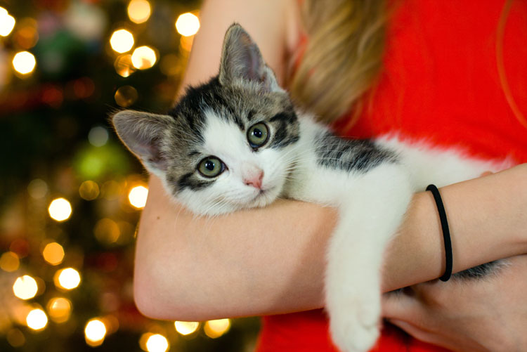 Kitten kerstsfeer verzekering