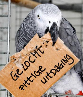 Pittige uitdaging voor papegaaien