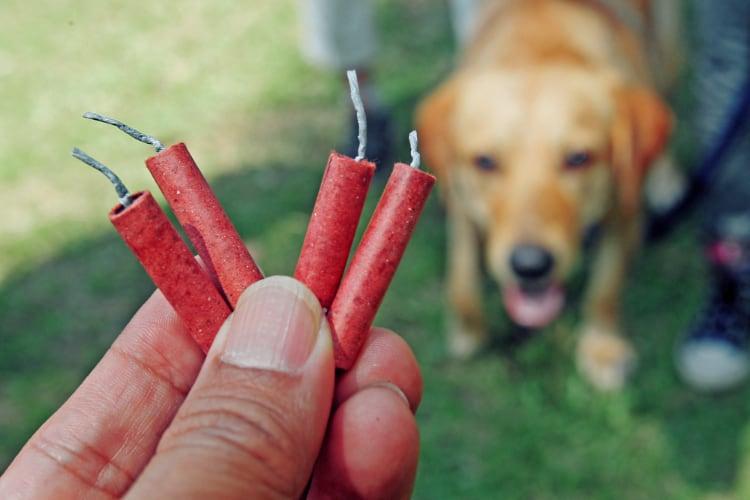 Vuurwerk geen pretje voor dieren