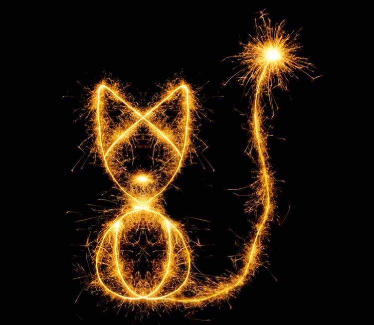 Vuurwerk kat