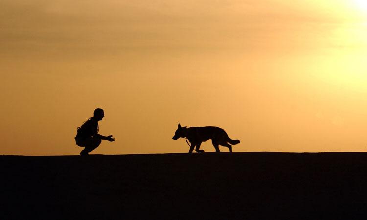 Coaching voor huisdieren