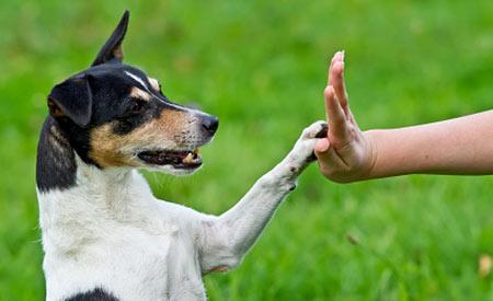 Iets lekkers geven, extra aandacht of een speeltje: dat geeft de huisdiereigenaar aan zijn huisdier tijdens Dierendag