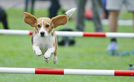 sport en spel met de hond