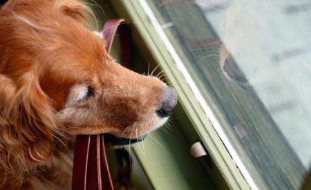 Niet opgehaalde hond in een dierenpension