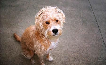 Malfide hondenhandel