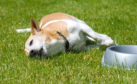Zieke hond in het pension? Medifonds helpt financiële druk voorkomen.