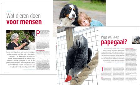 Artikelen uit het Dibevo-Vakblad