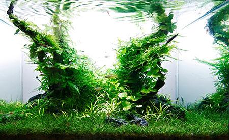 Dibevo-Vakbeurs 2014 - persbericht aquascaping