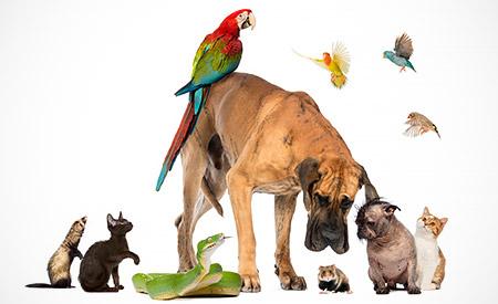 Besluit houders van dieren
