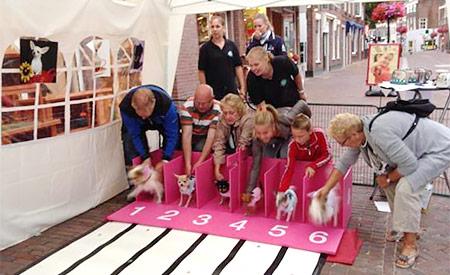Chihuahua-race bij 't Dierenparadijs in Zoetermeer
