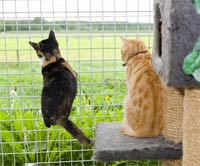 Katten bij Dierenpension Annemiek