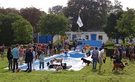 Dierenspeciaalzaak Mascha - hondenzwemmen in Dordrecht