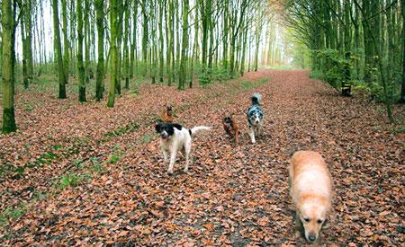 Hondenuitlaatservice Olijke Vriendjes