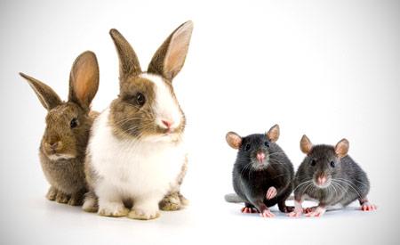 Positieflijst zoogdieren = huisdierenlijst