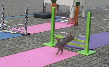 Faunaland van Grootel Horst organiseerde voor het eerst een konijnen-hop demonstratie