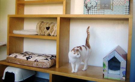 De Dierenvriendin breidt uit met een kleinschalig kattenpension
