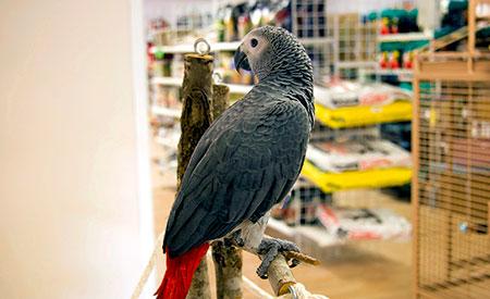 Vogelzaak