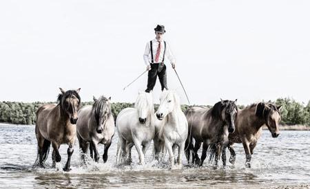 Animal Event - Pierre Fleury