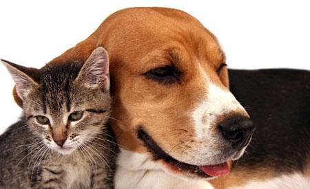 Dierenpensionhouders moeten Uniek Bedrijfsnummer (UBN) aanvragen