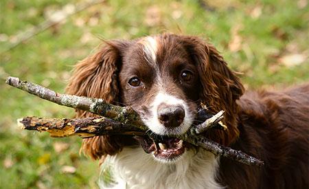 Hond met stokken