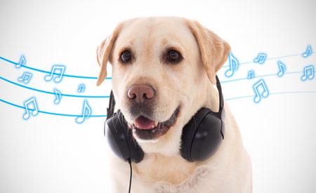 Hond luistert naar muziek
