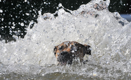 Hondenduik op Animal Event