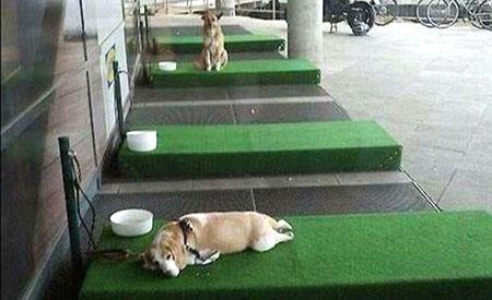 Hondenwachtruimte Ikea Keulen