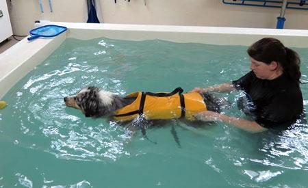 Hydrotherapie bij 't Kempisch Dierenpension