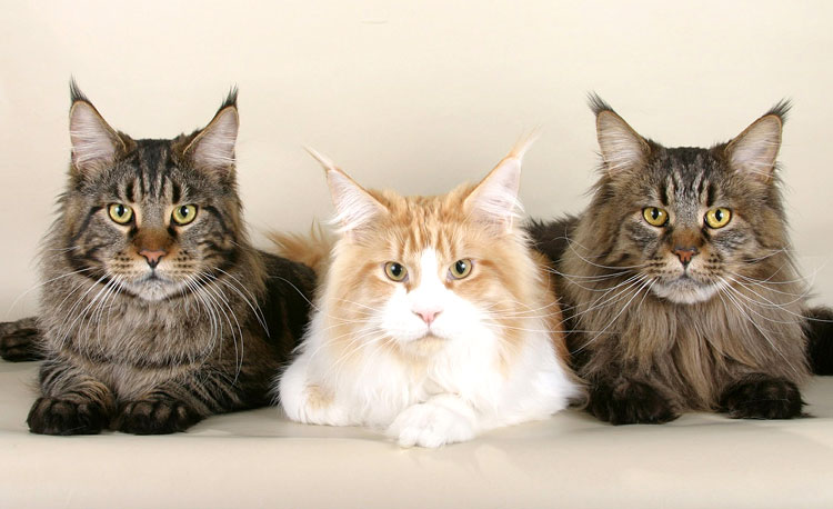 Dierenspeciaalzaak Wesdijk organiseert Kattendag