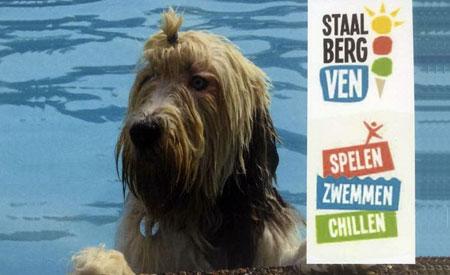 Zwemmen met je hond in het Staalbergven