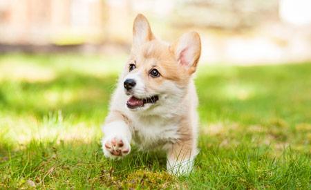 Puppy - een klant voor het leven?