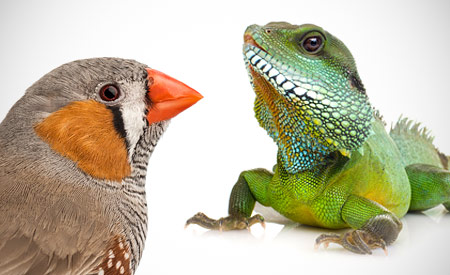 Zang- en siervogels en reptielen zorgen voor toename in het totaal aantal gezelschapsdieren