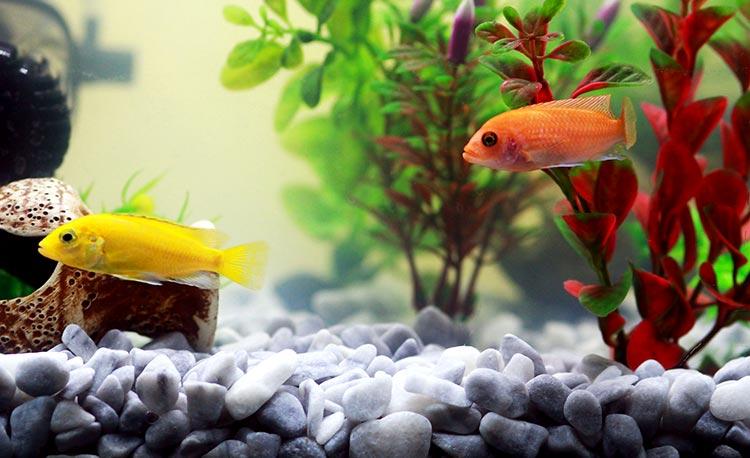 Vissen & aquarium