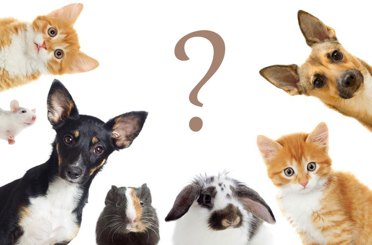 Huisdieren en vakbekwaamheid