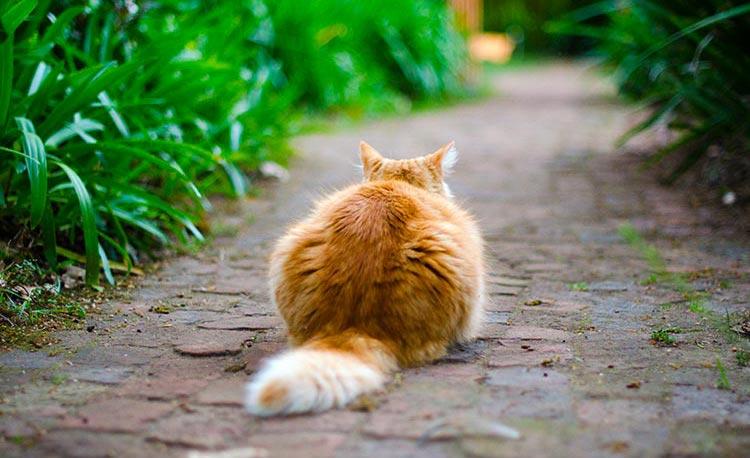 Kattenvoeding - problemen en oplossingen