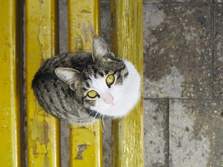 Vaccineren van een kat