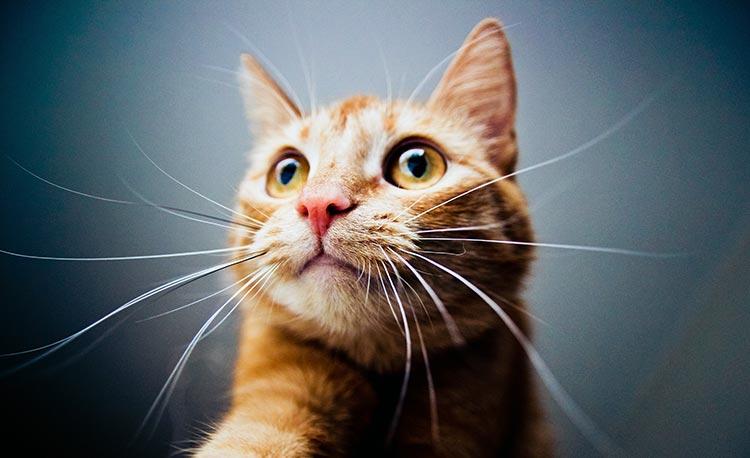 Katten voor katten