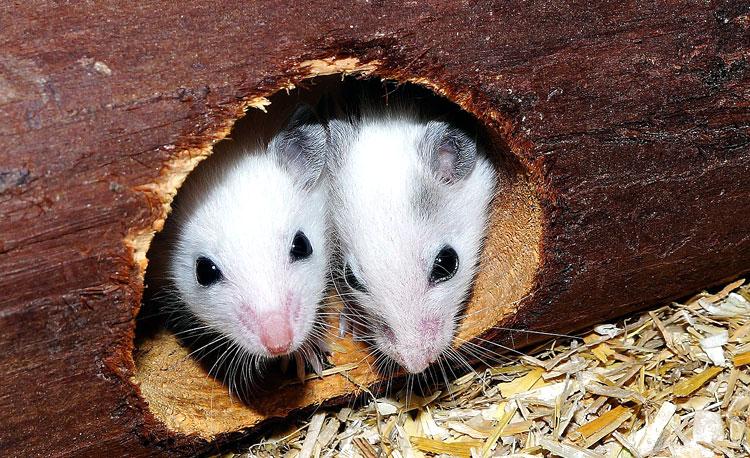 Aankoop dier in een dierenspeciaalzaak