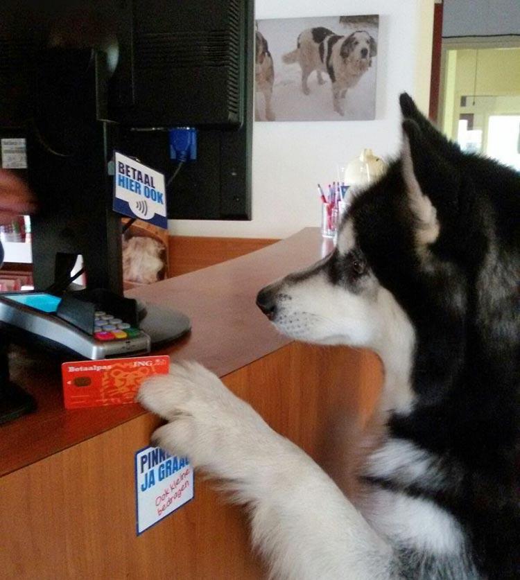 De hond aan het pinnen