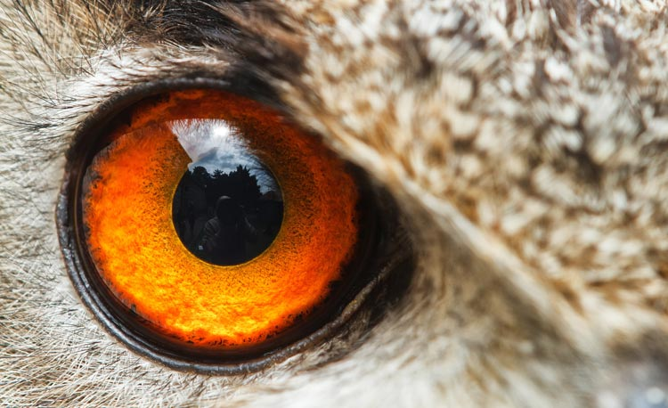 Standpunt van Dibevo over dieren in de dierenspeciaalzaak