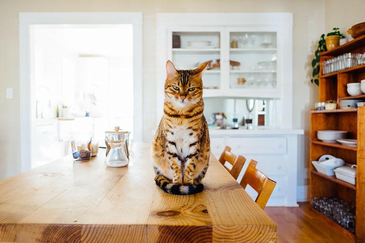 Grumpy kat