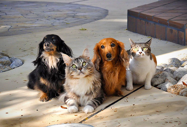 Honden en katten buiten