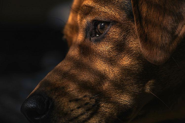 Hond niet opgehaald uit het dierenpension of dierenhotel