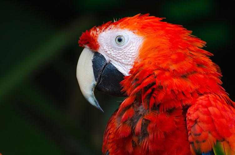 Papegaai en gedrag