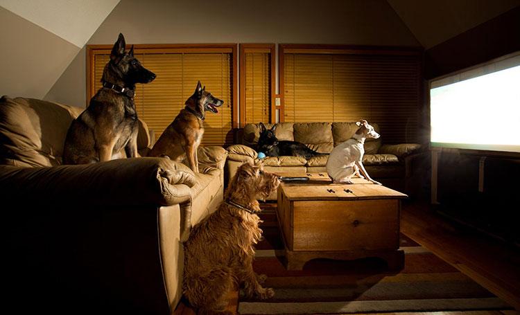 Hondenbioscoop
