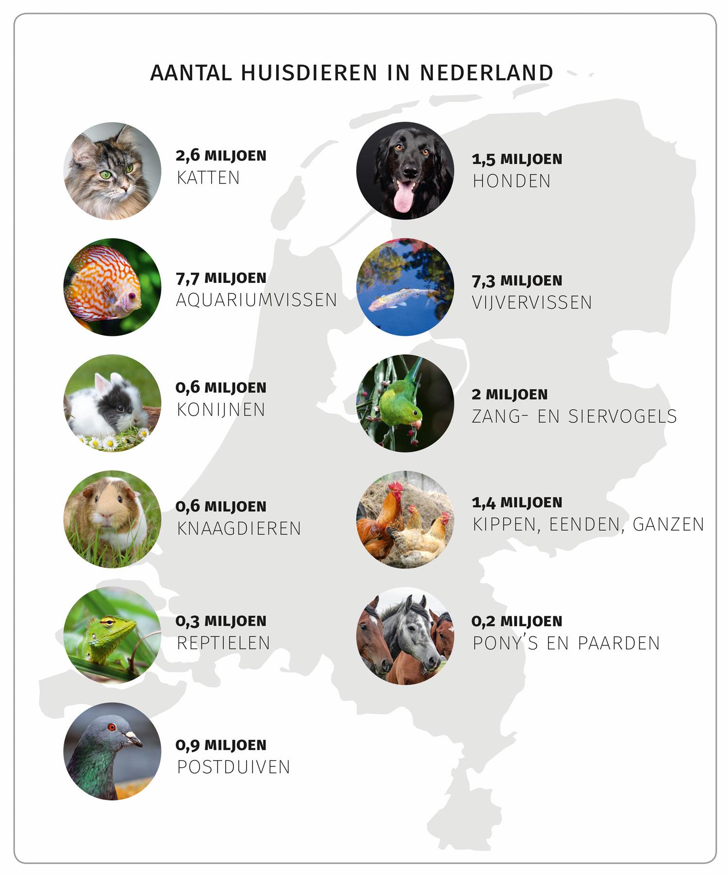 Aantal huisdieren in Nederland